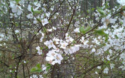 """Весна""""""""/"""